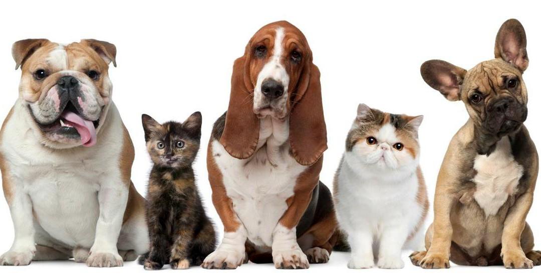 Alimentos balanceados o piensos para perros y gatos