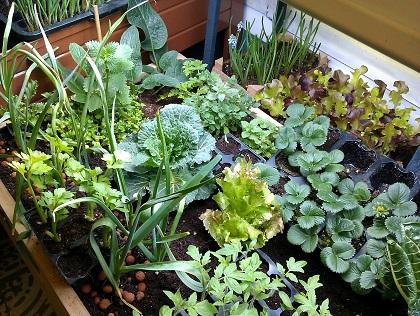 Macetas, jardines y huertos comunitarios para cultivar