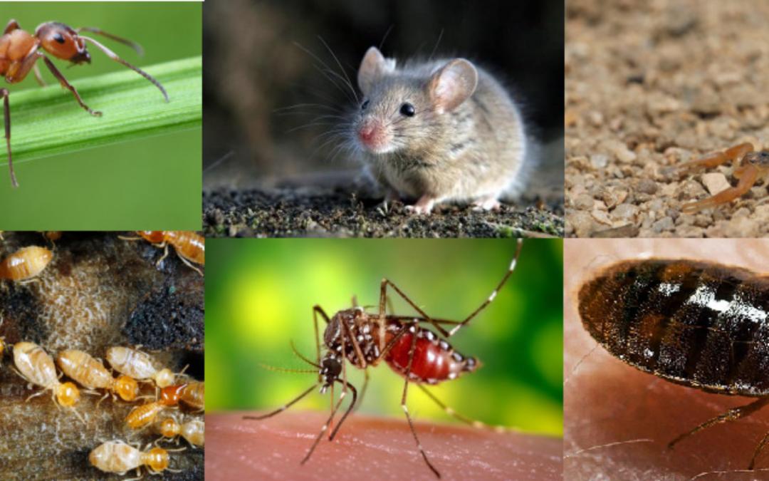 Métodos de control de plagas